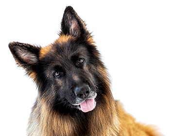Sensitive <span>Veterinary Diet</span>